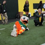 October 27 2012 Eugene OR USA Oregon Ducks mascot entertains at halftime against the Colorado Buffaloes at Autzen Stadium. Mandatory Credit Scott Olmos US PRESSWIRE